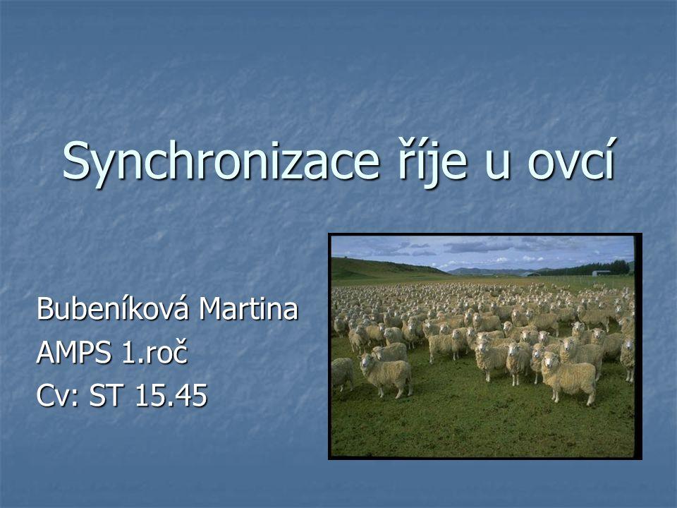 Synchronizace říje u ovcí