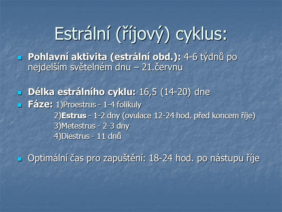 Estrální (říjový) cyklus: