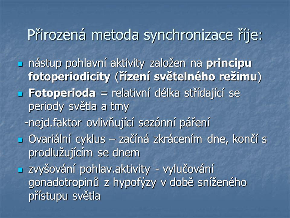 Přirozená metoda synchronizace říje: