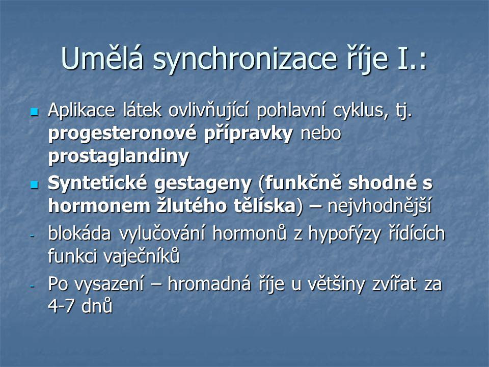 Umělá synchronizace říje I.: