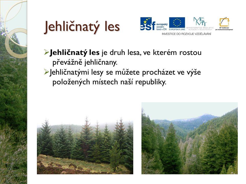 Jehličnatý les Jehličnatý les je druh lesa, ve kterém rostou převážně jehličnany.