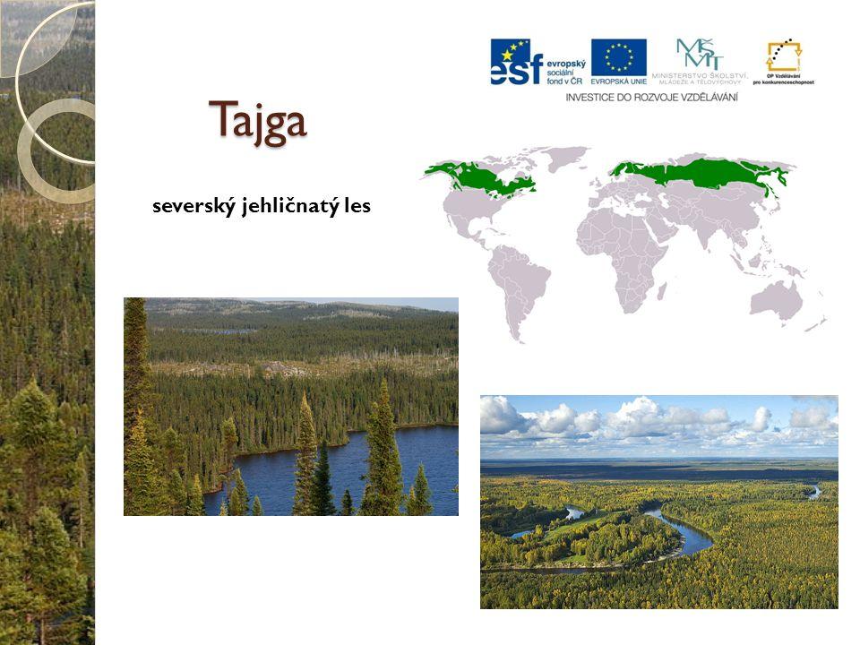 Tajga severský jehličnatý les