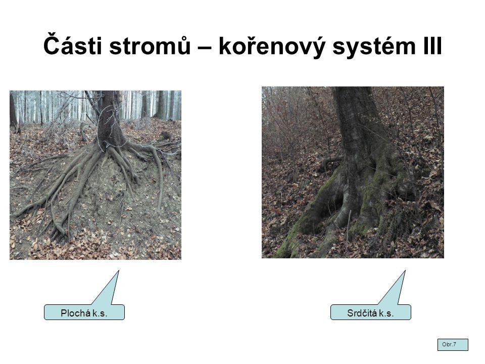 Části stromů – kořenový systém III