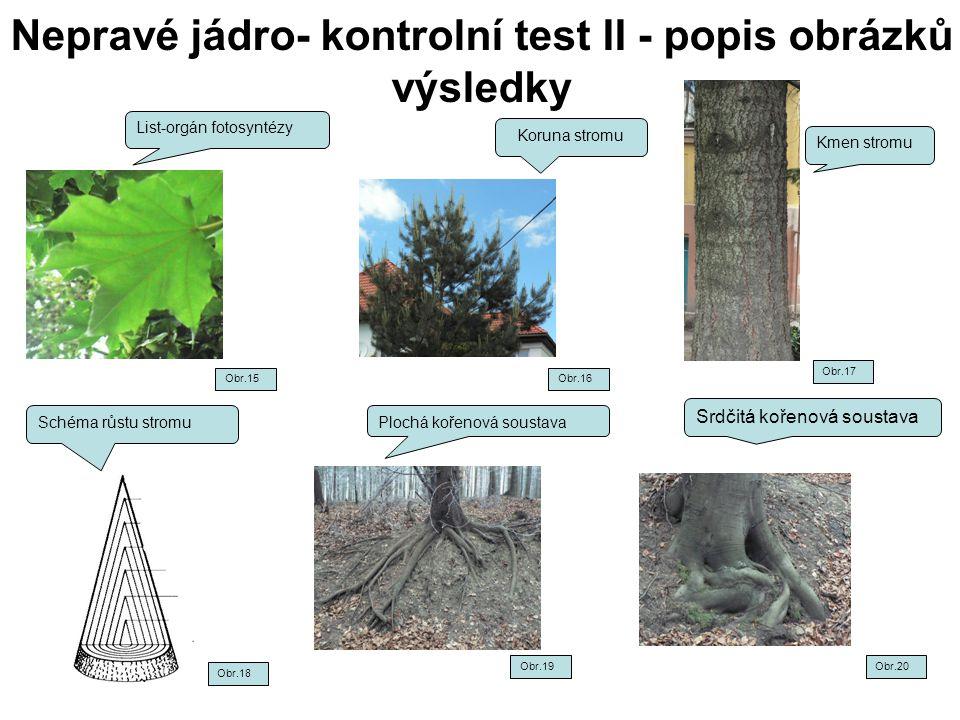 Nepravé jádro- kontrolní test II - popis obrázků výsledky