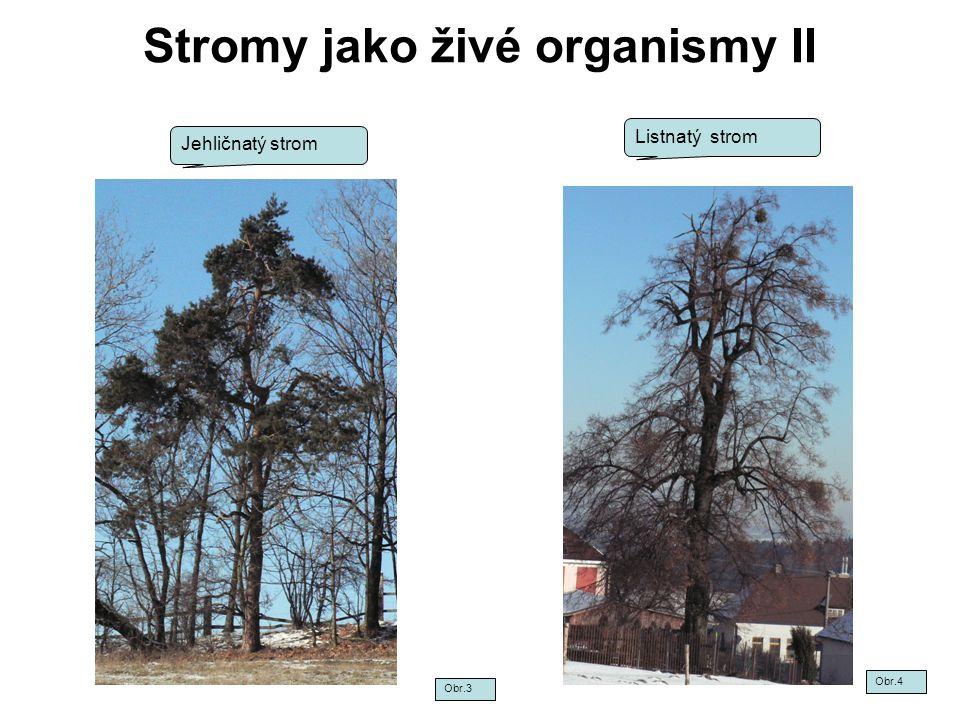 Stromy jako živé organismy II