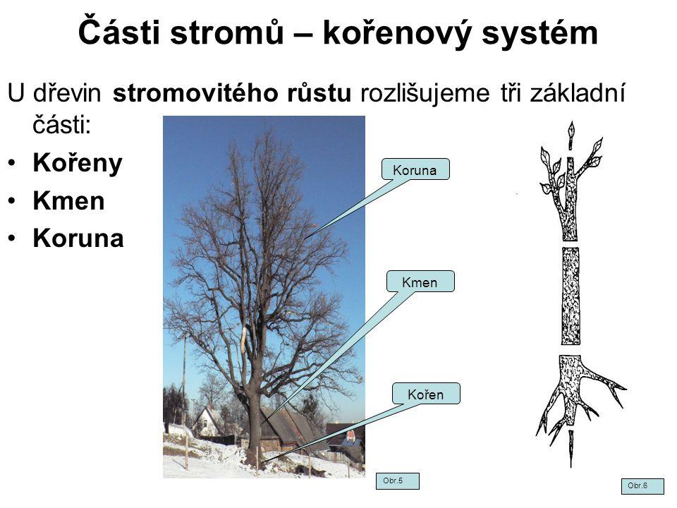 Části stromů – kořenový systém