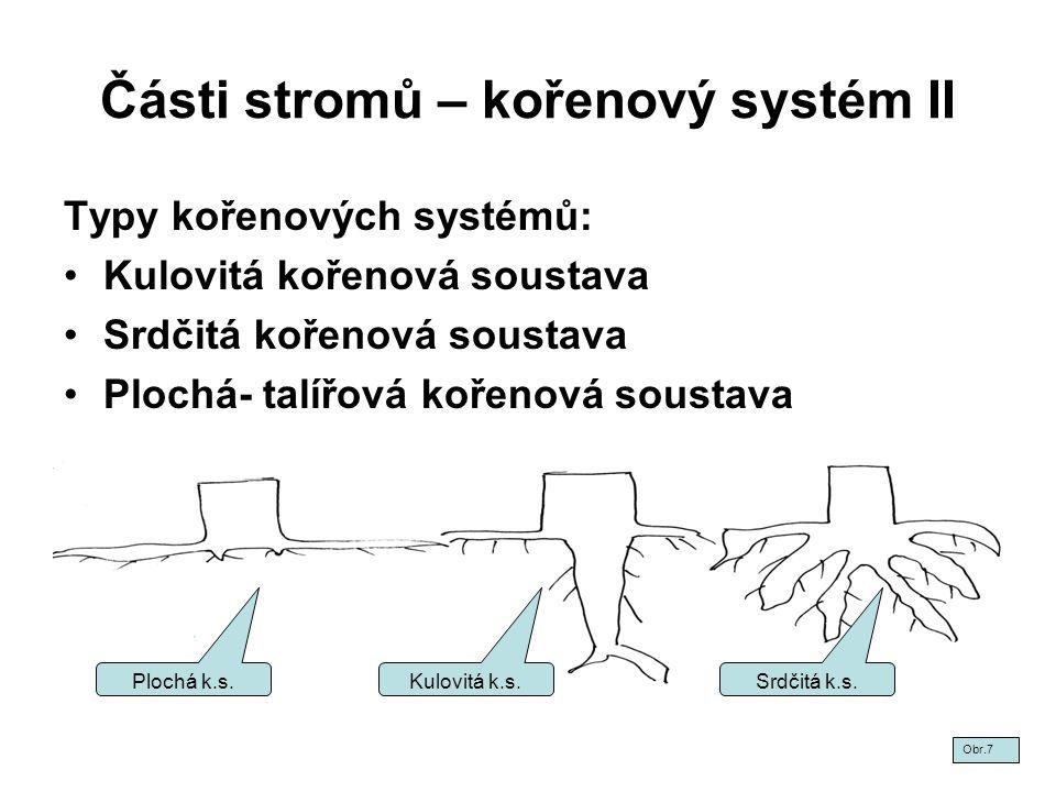 Části stromů – kořenový systém II