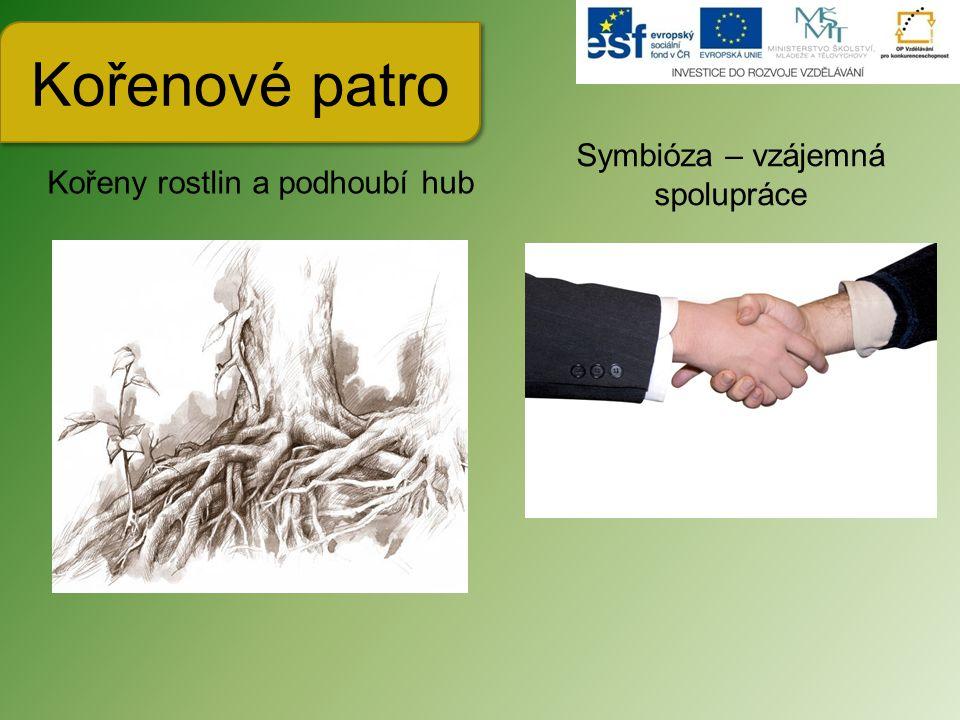 Kořenové patro Symbióza – vzájemná spolupráce
