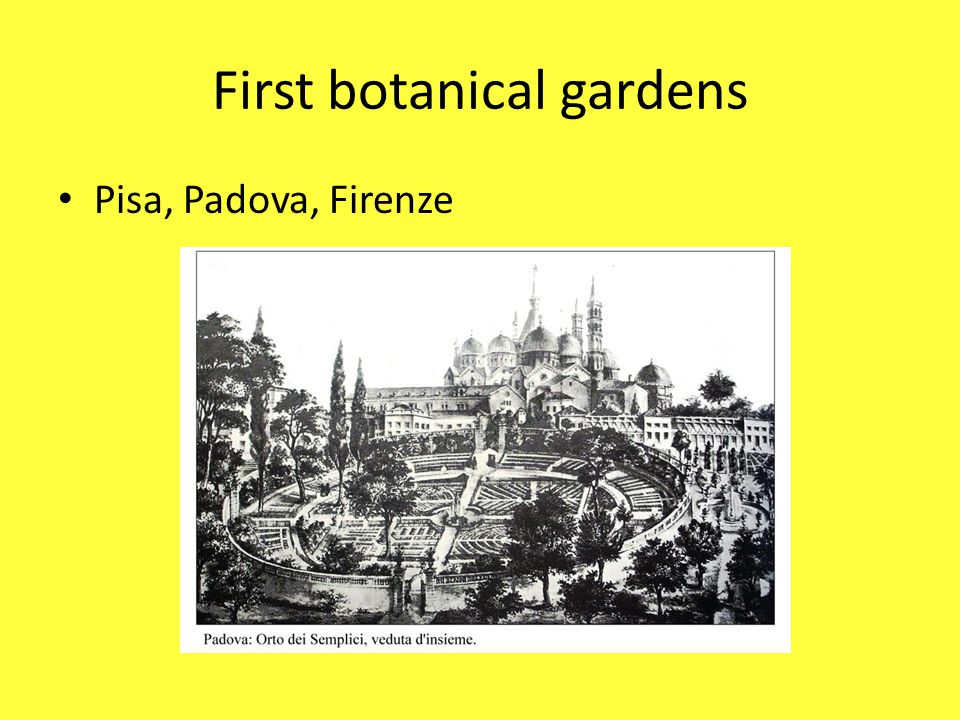 First botanical gardens