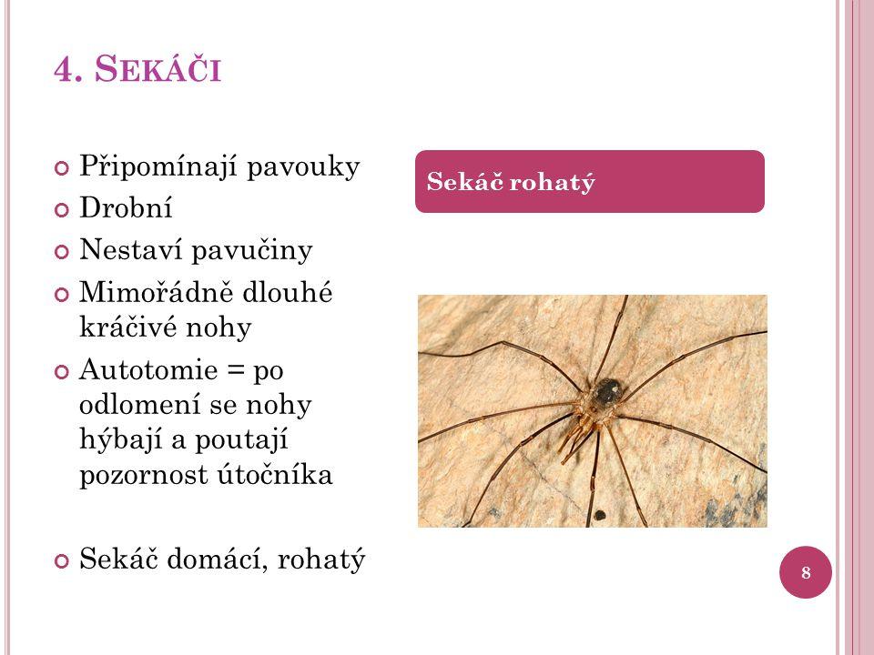 4. Sekáči Připomínají pavouky Drobní Nestaví pavučiny