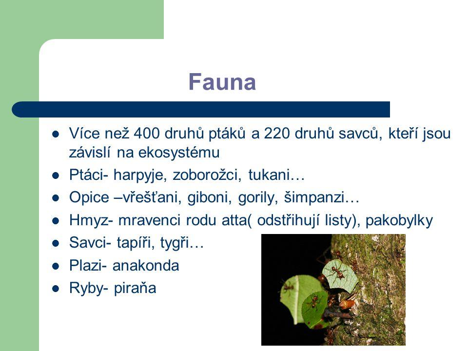 Fauna Více než 400 druhů ptáků a 220 druhů savců, kteří jsou závislí na ekosystému. Ptáci- harpyje, zoborožci, tukani…