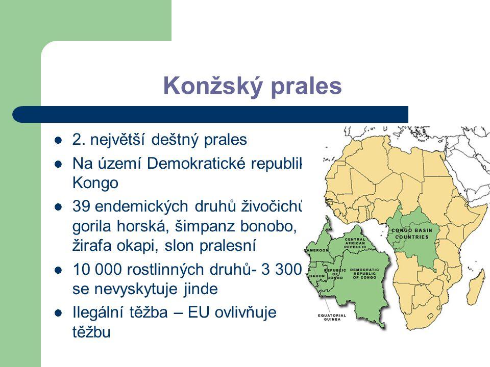 Konžský prales 2. největší deštný prales