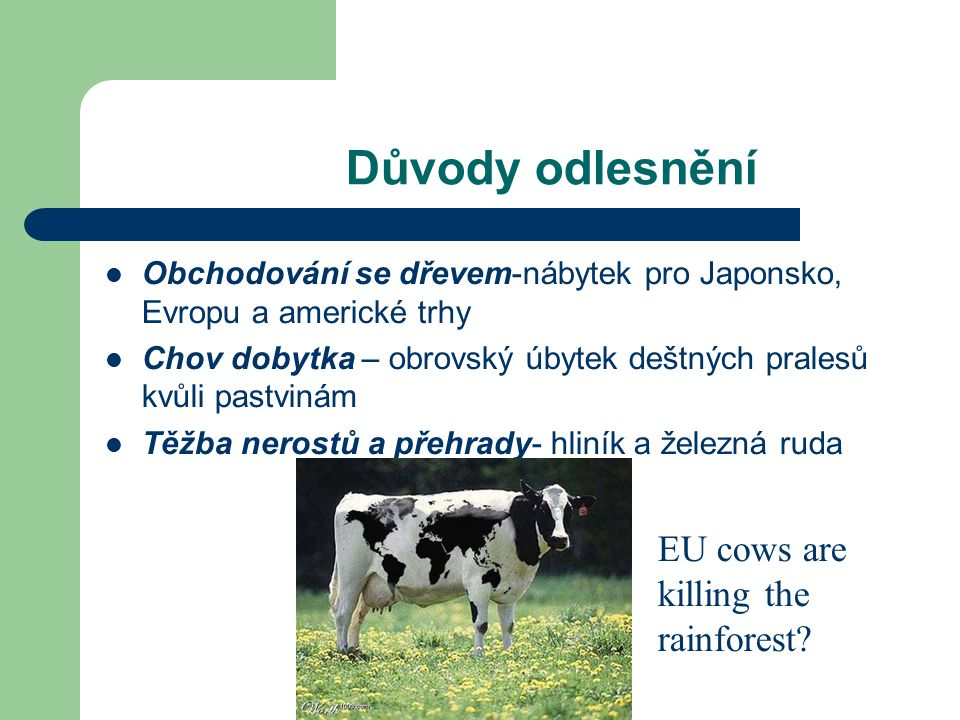 Důvody odlesnění EU cows are killing the rainforest