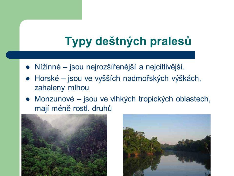 Typy deštných pralesů Nížinné – jsou nejrozšířenější a nejcitlivější.