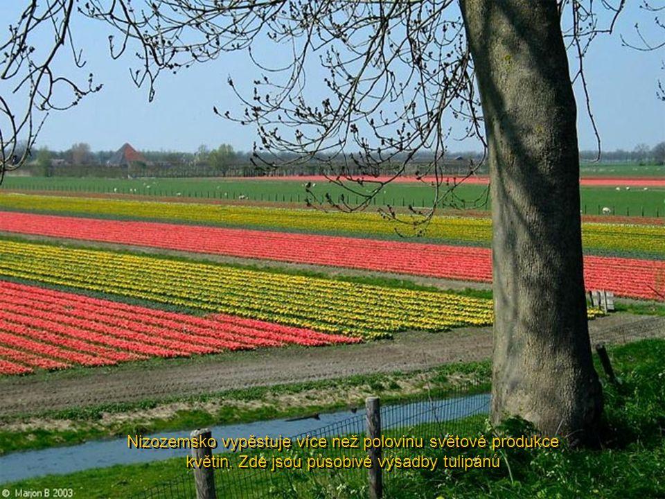 Nizozemsko vypěstuje více než polovinu světové produkce květin