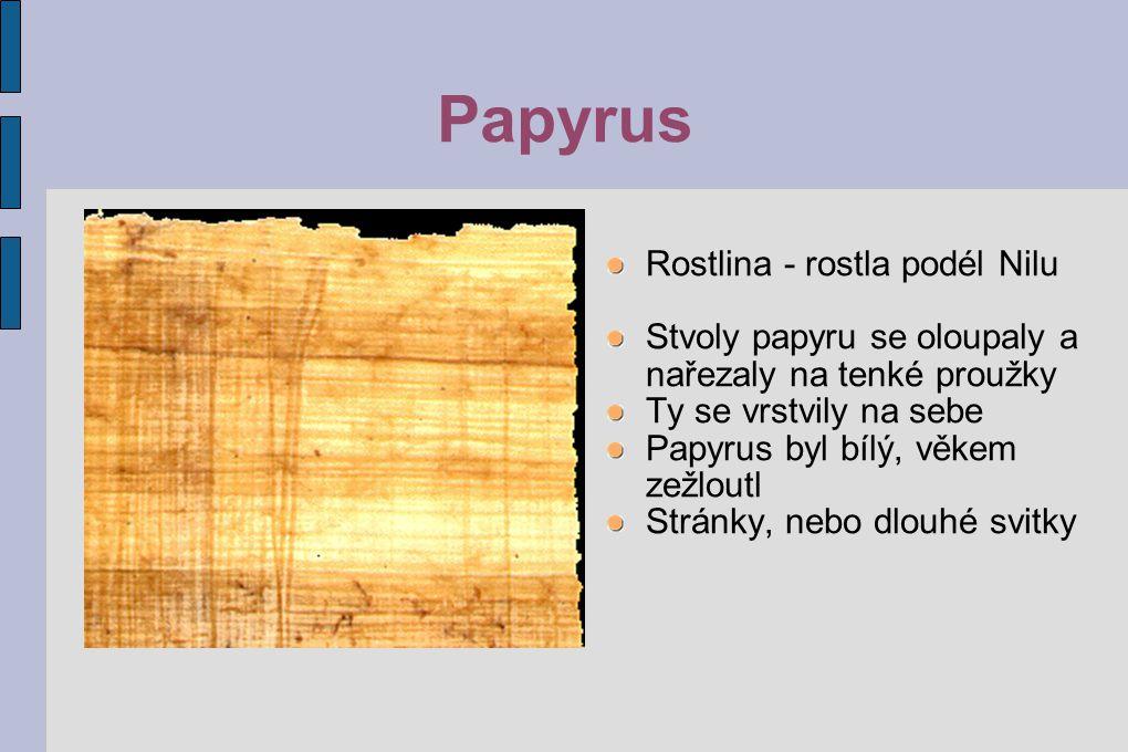 Papyrus Rostlina - rostla podél Nilu