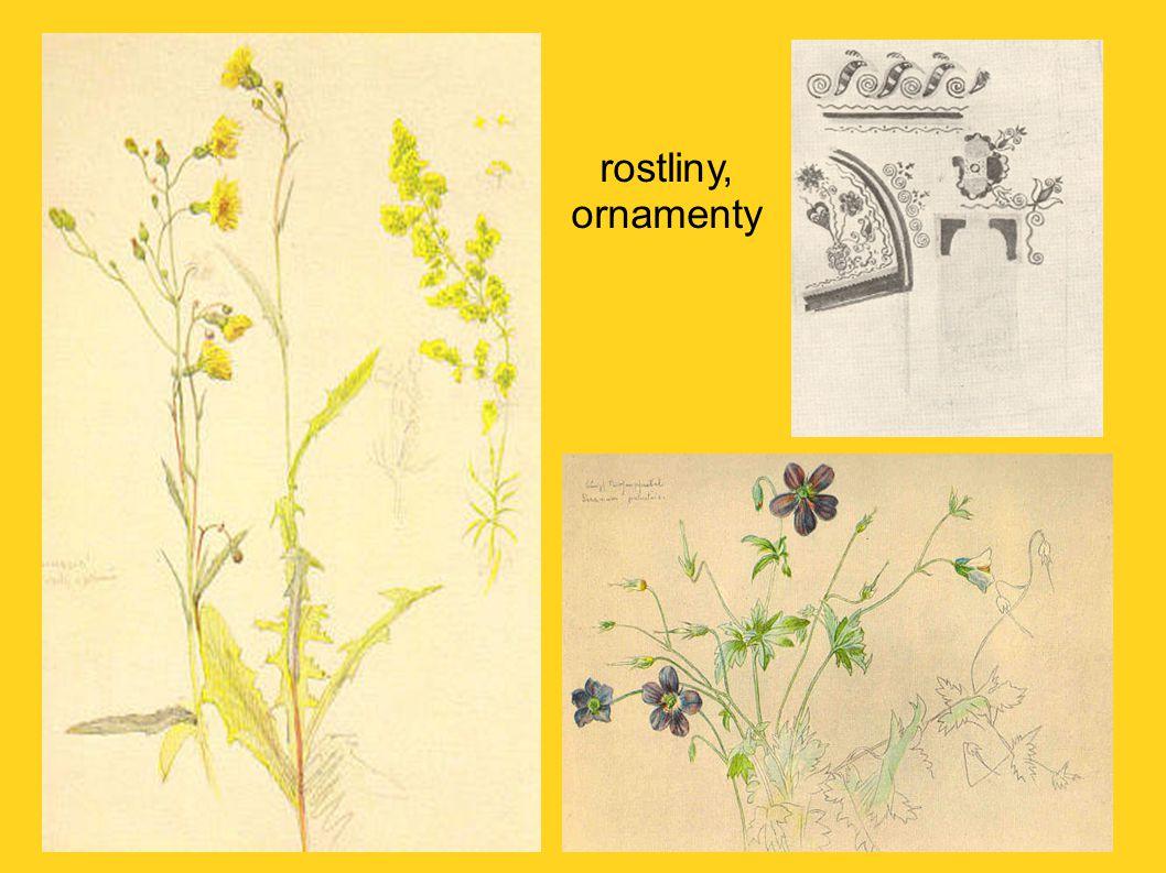 rostliny, ornamenty