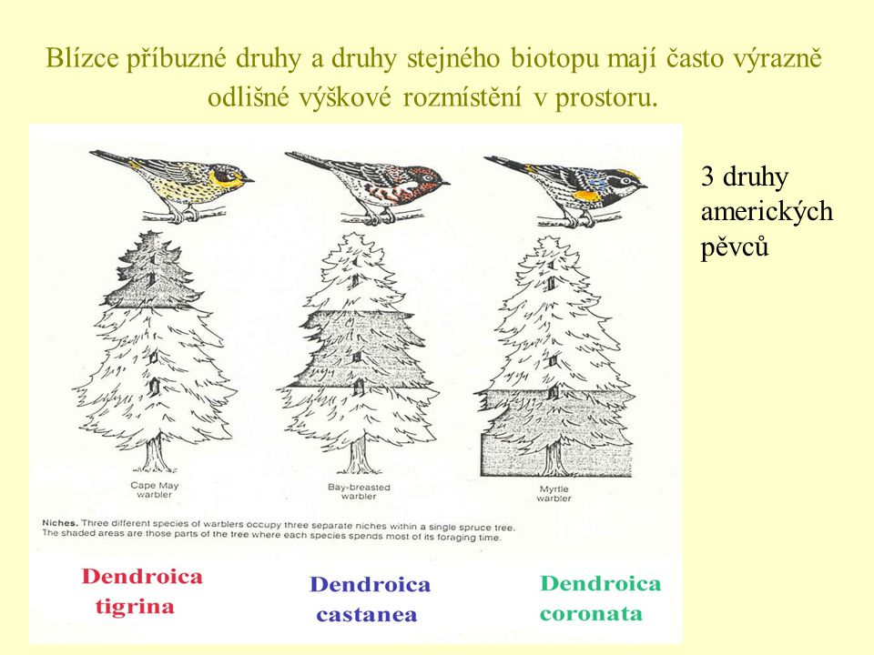 Blízce příbuzné druhy a druhy stejného biotopu mají často výrazně odlišné výškové rozmístění v prostoru.