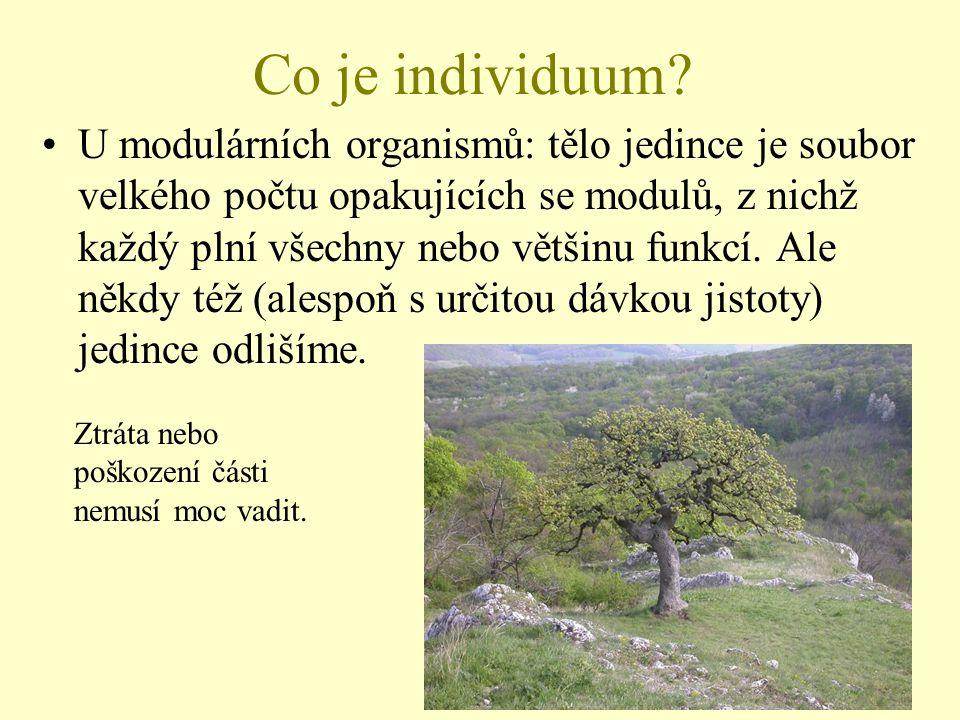 Co je individuum