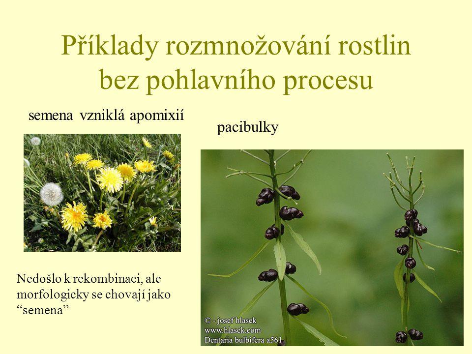 Příklady rozmnožování rostlin bez pohlavního procesu