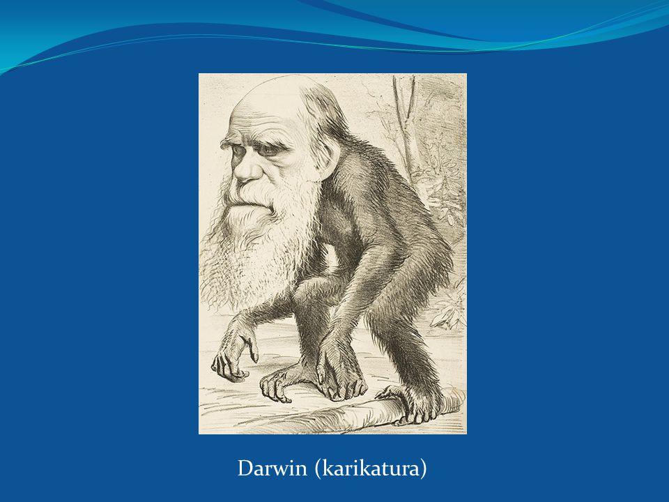 Darwin (karikatura)