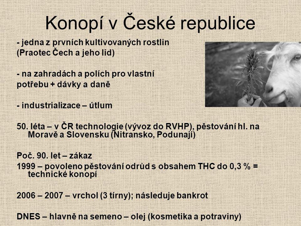 Konopí v České republice
