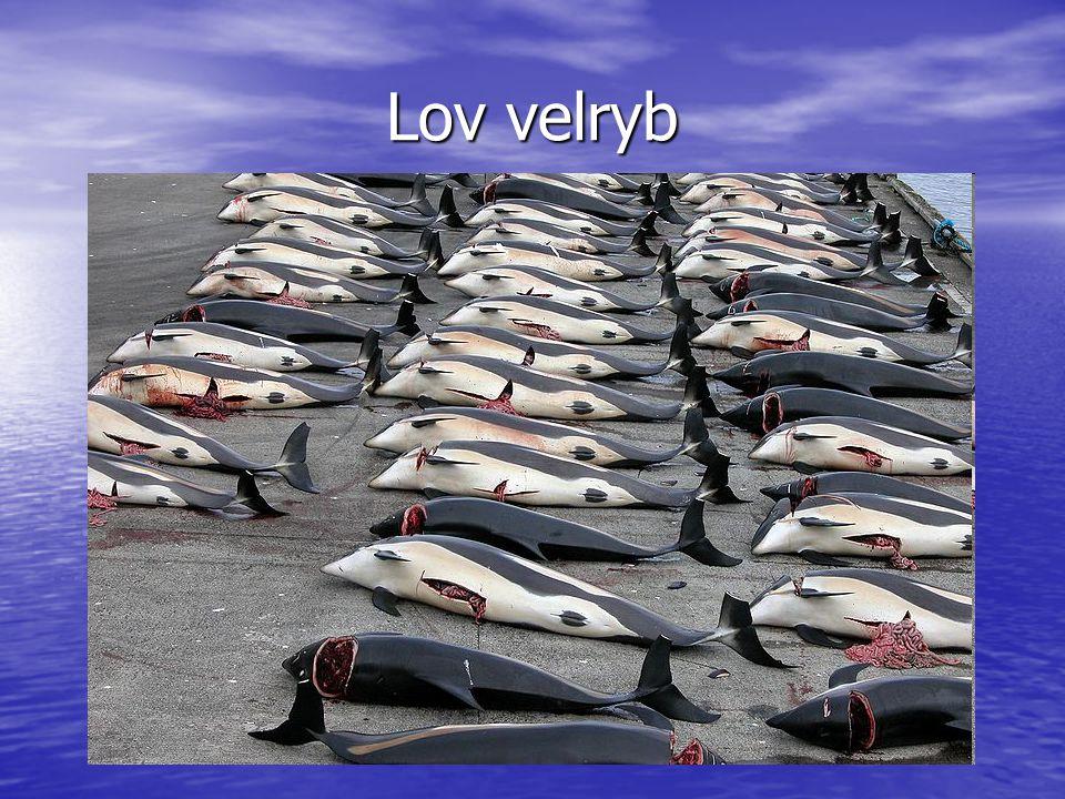 Lov velryb