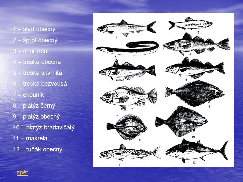 1 – sleď obecný 2 – šprot obecný. 3 – úhoř říční. 4 – treska obecná. 5 – treska skvrnitá. 6 – treska bezvousá.