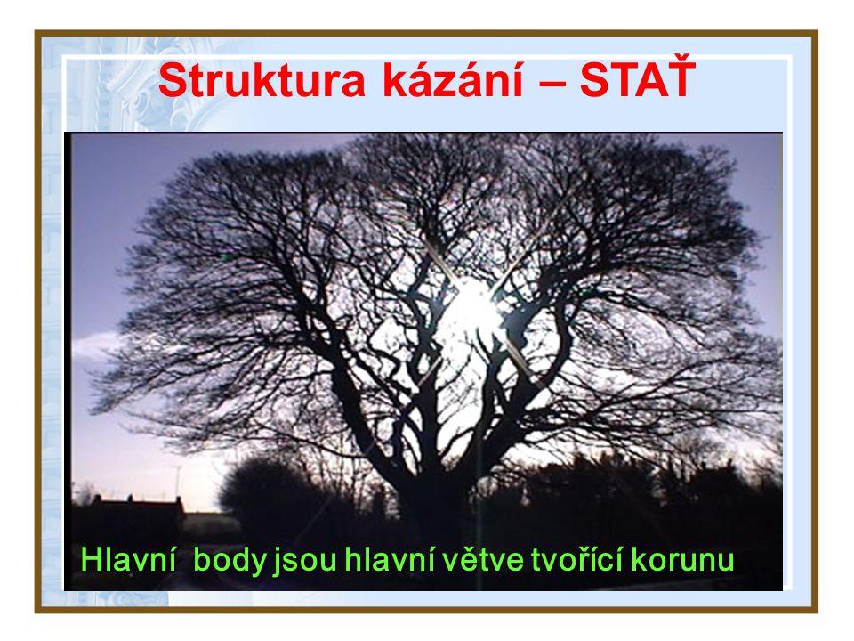 Hlavní body jsou hlavní větve tvořící korunu