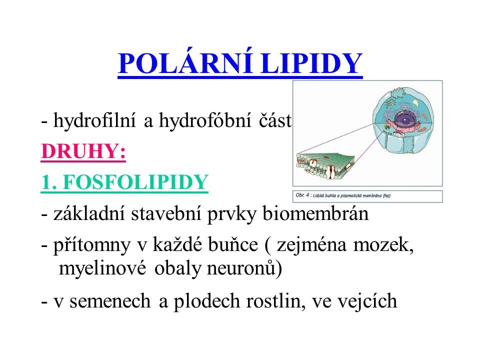 POLÁRNÍ LIPIDY - hydrofilní a hydrofóbní část DRUHY: 1. FOSFOLIPIDY