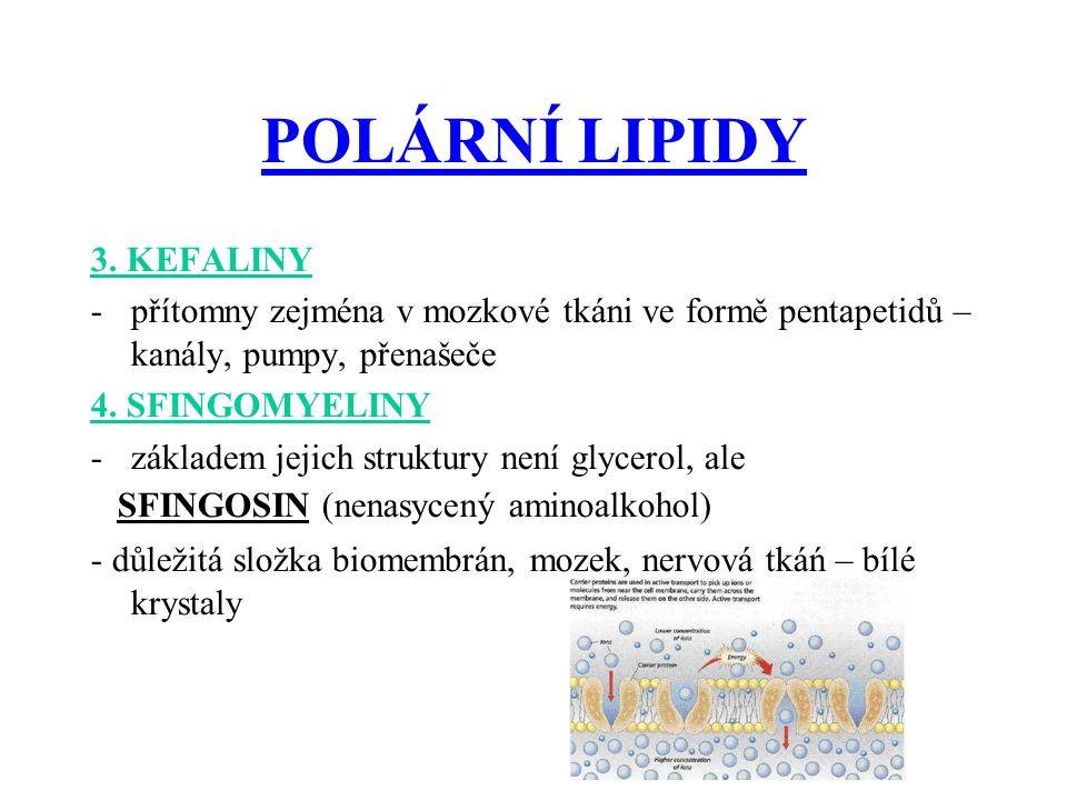 POLÁRNÍ LIPIDY 3. KEFALINY