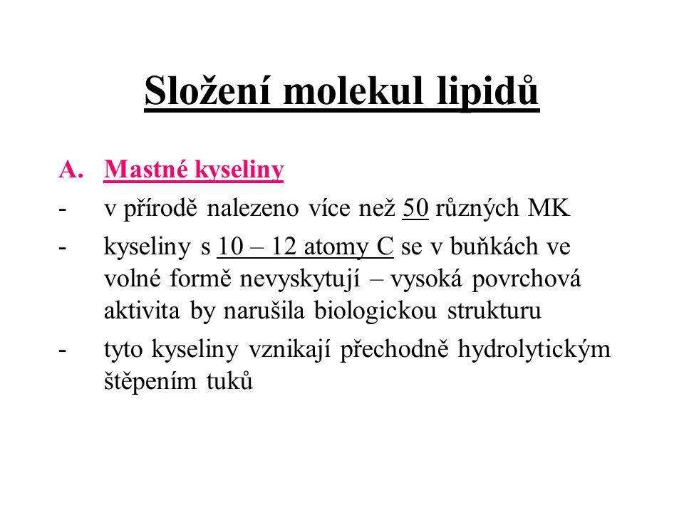 Složení molekul lipidů