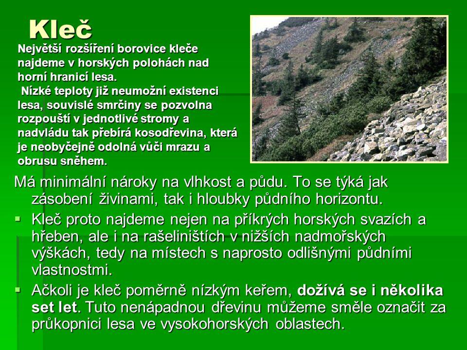 Kleč Největší rozšíření borovice kleče najdeme v horských polohách nad horní hranicí lesa.
