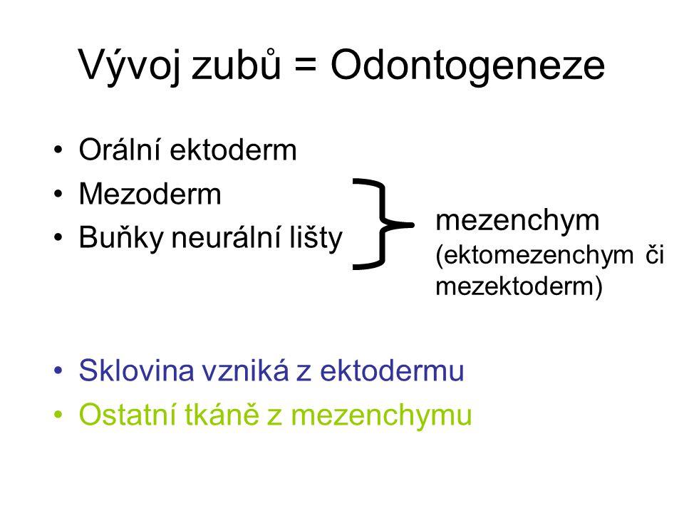 Vývoj zubů = Odontogeneze