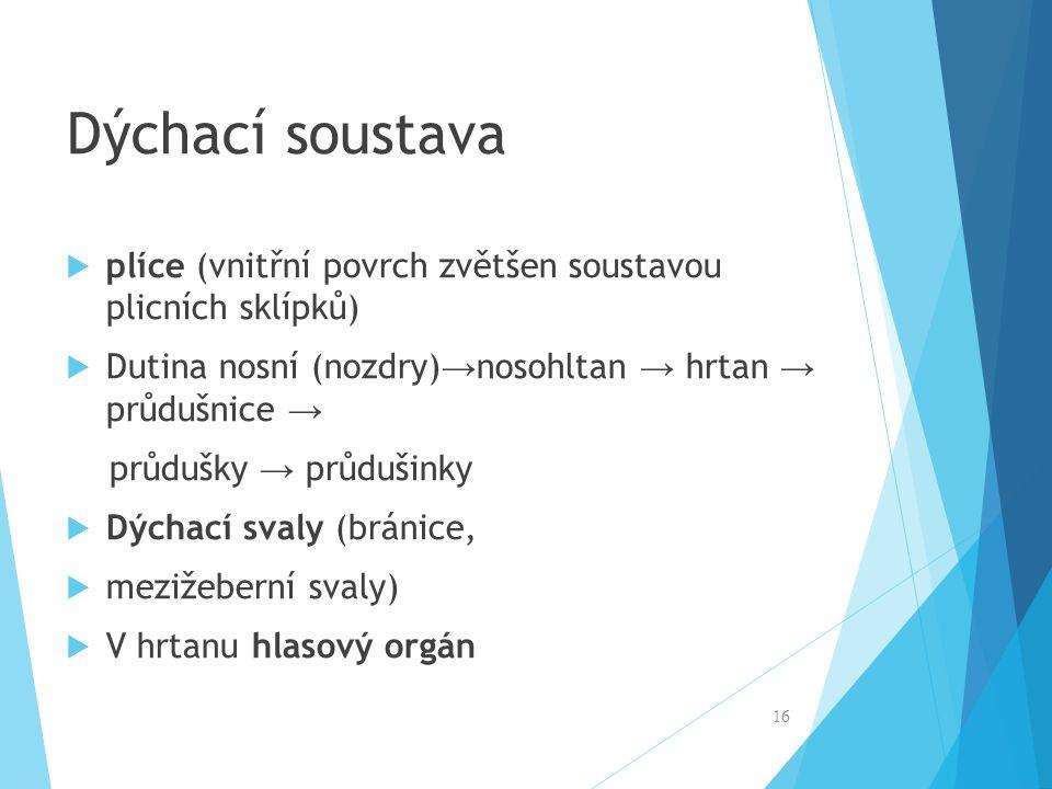 Dýchací soustava plíce (vnitřní povrch zvětšen soustavou plicních sklípků) Dutina nosní (nozdry)→nosohltan → hrtan → průdušnice →
