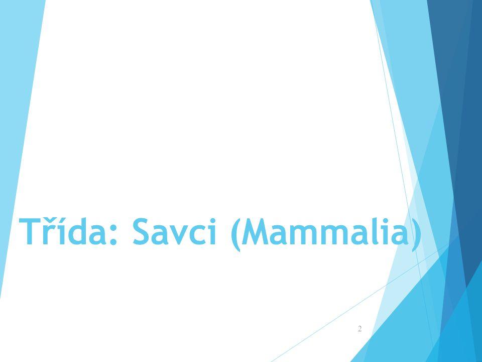 Třída: Savci (Mammalia)