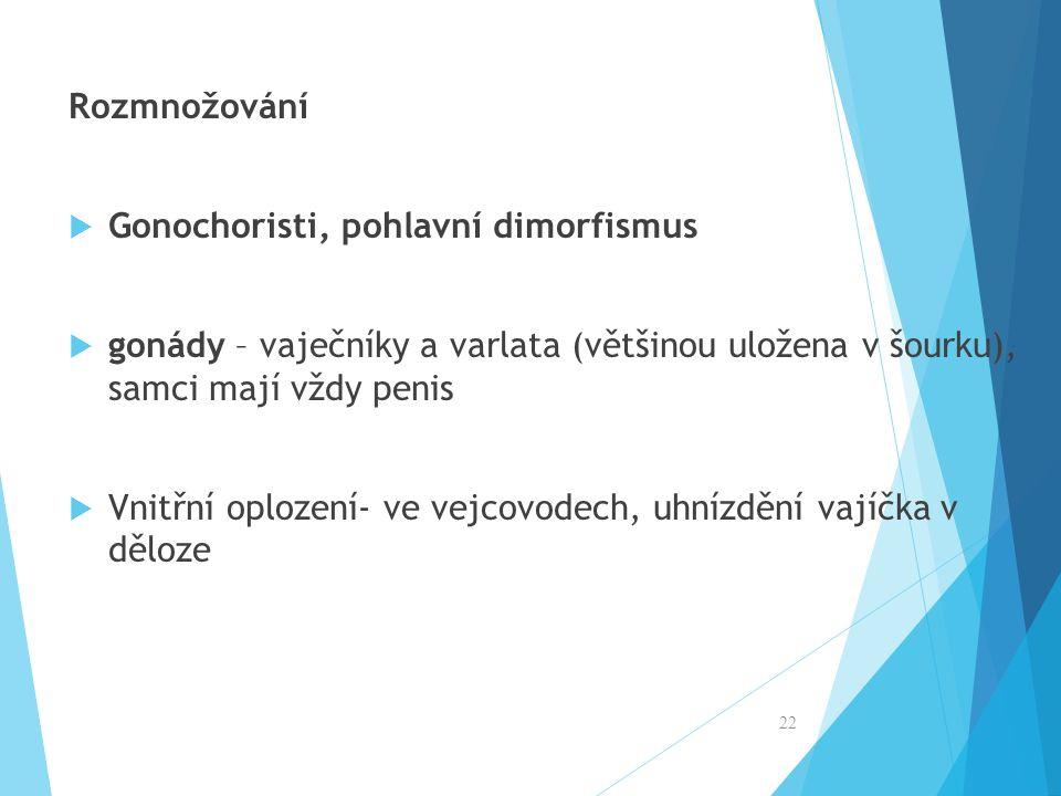 Rozmnožování Gonochoristi, pohlavní dimorfismus. gonády – vaječníky a varlata (většinou uložena v šourku), samci mají vždy penis.