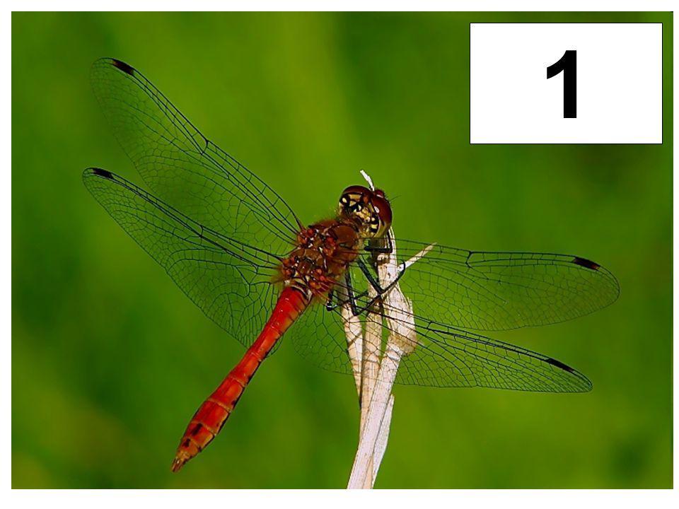 1 Vážky
