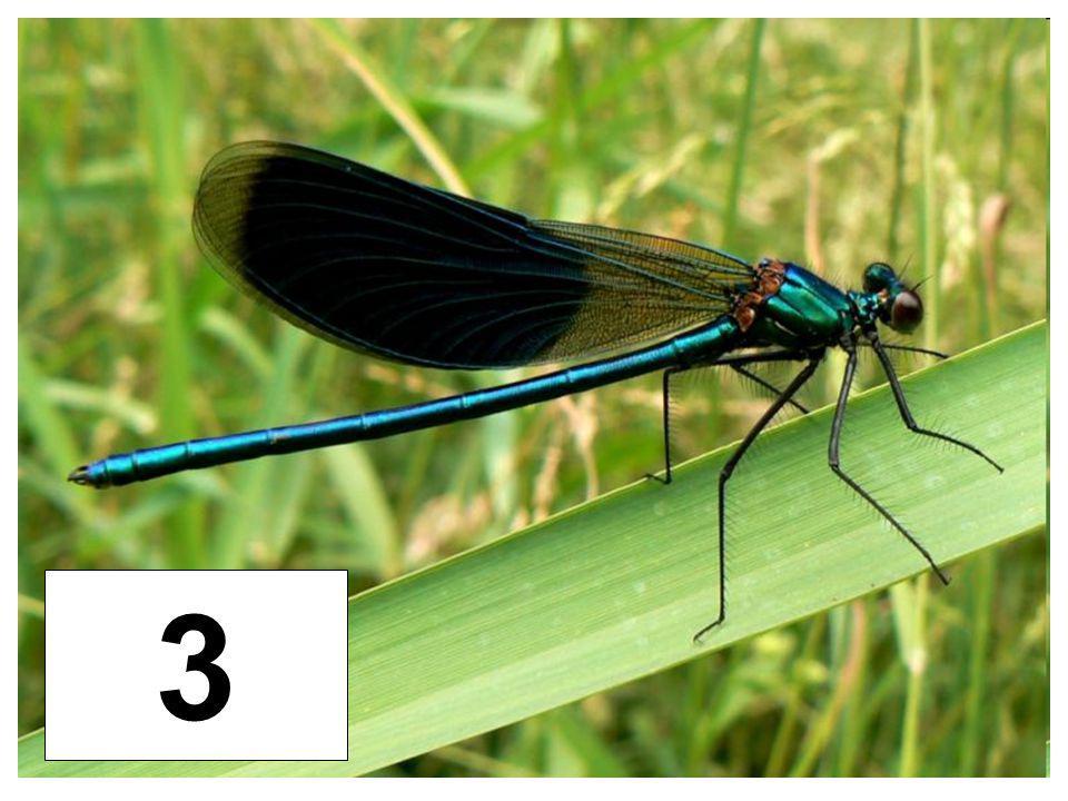 Motýlice 3