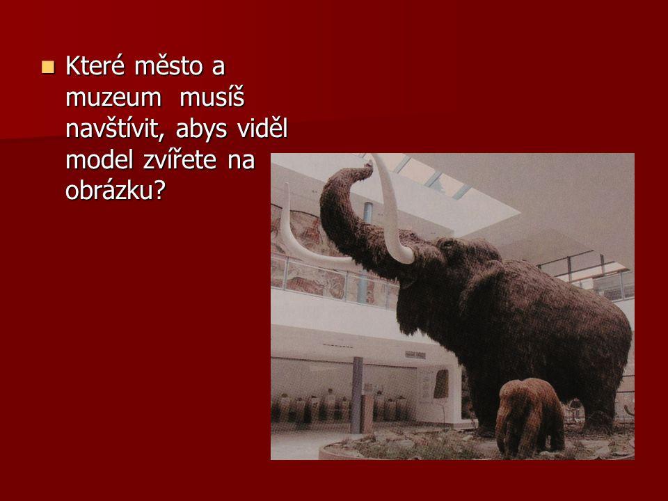 Které město a muzeum musíš navštívit, abys viděl model zvířete na obrázku