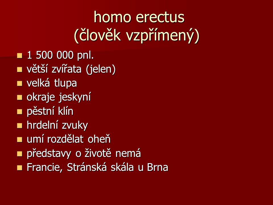 homo erectus (člověk vzpřímený)