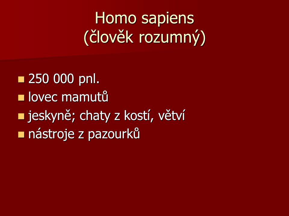 Homo sapiens (člověk rozumný)