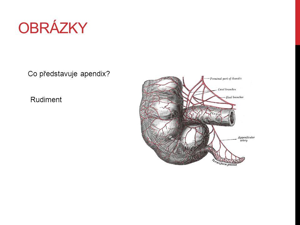 obrázky Co představuje apendix Rudiment