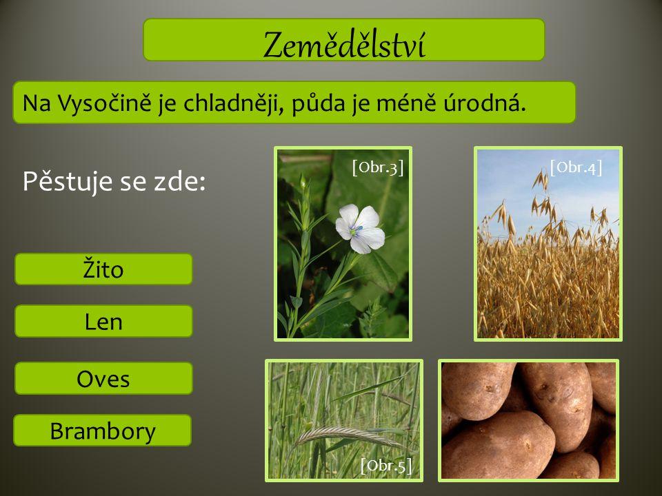 Zemědělství Pěstuje se zde: