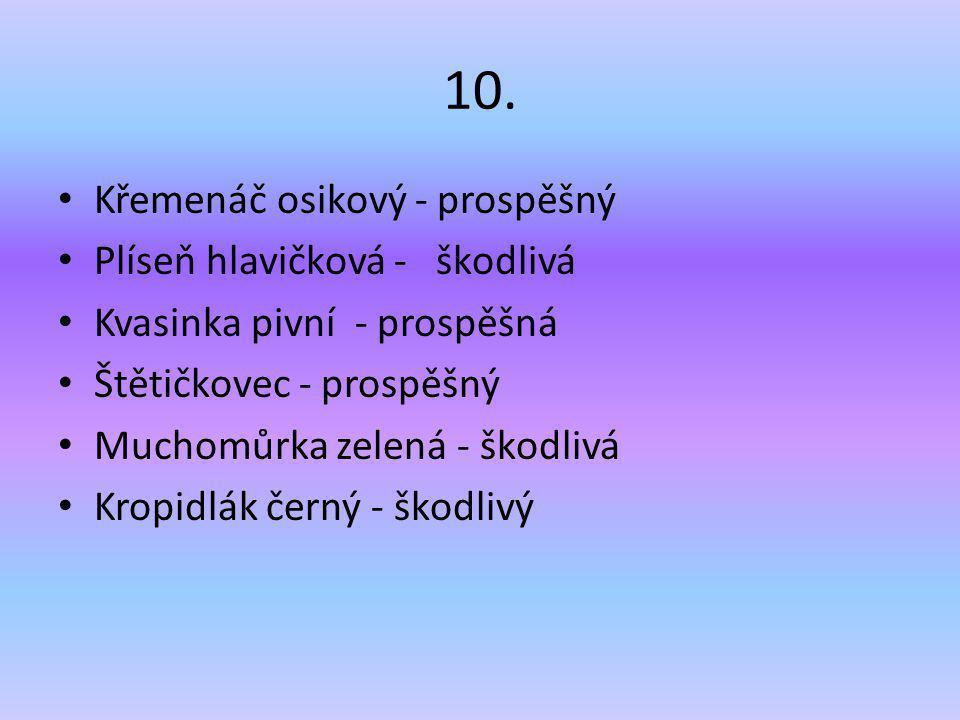 10. Křemenáč osikový - prospěšný Plíseň hlavičková - škodlivá