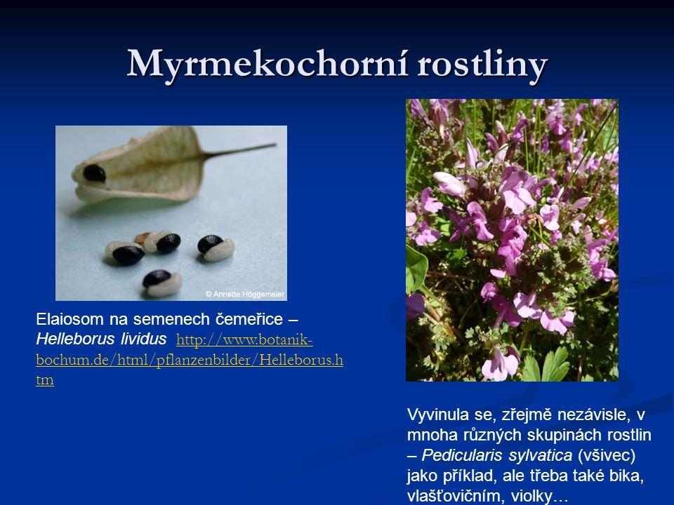 Myrmekochorní rostliny