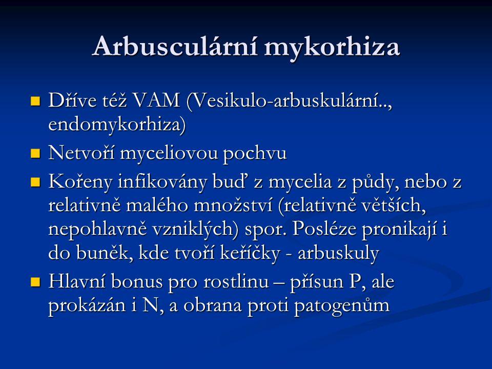 Arbusculární mykorhiza