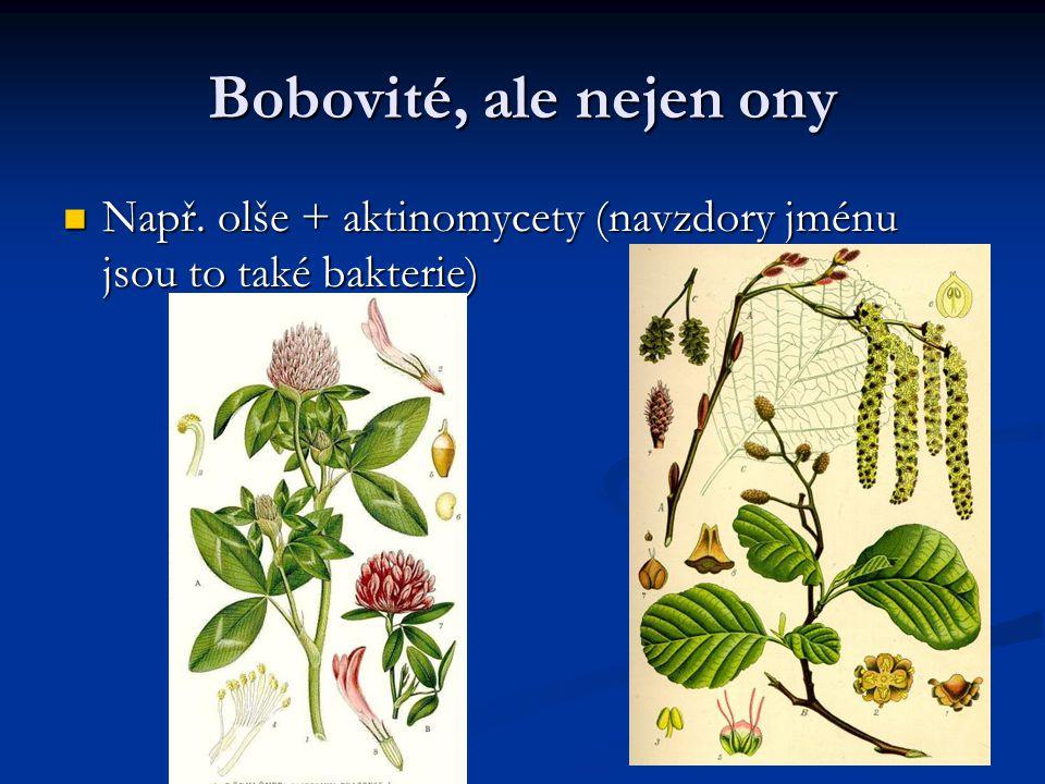 Bobovité, ale nejen ony Např. olše + aktinomycety (navzdory jménu jsou to také bakterie)