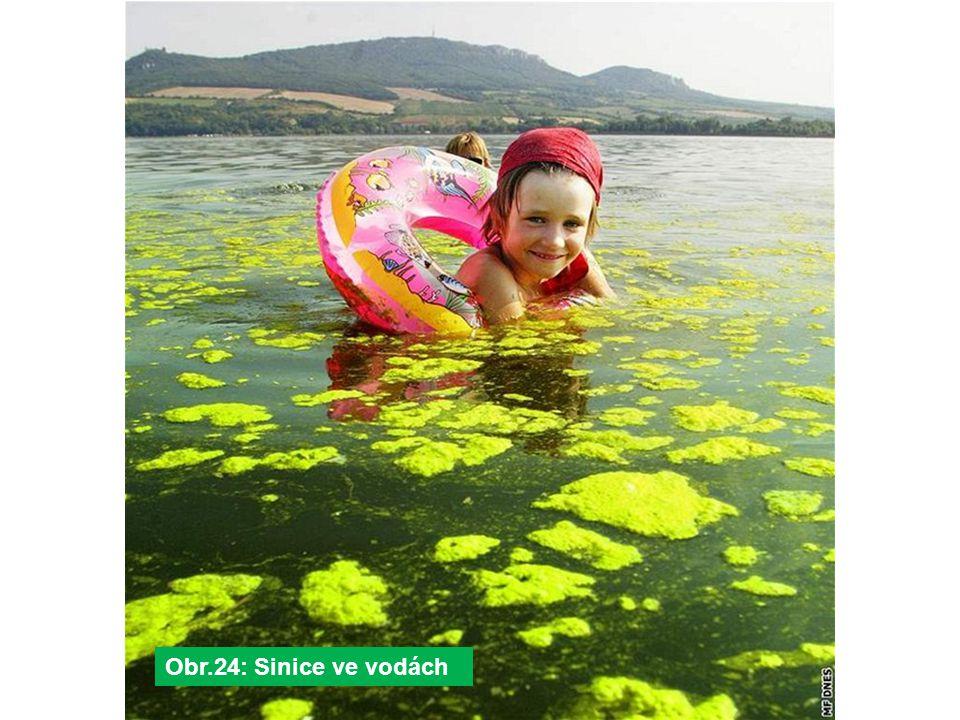 Obr.24: Sinice ve vodách