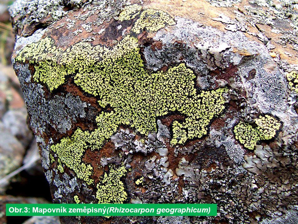 Obr.3: Mapovník zeměpisný(Rhizocarpon geographicum)